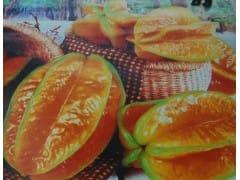 供应台湾香水柠檬种苗