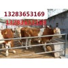 黑龙江肉牛价格黑龙江肉牛品种黑龙江养殖场