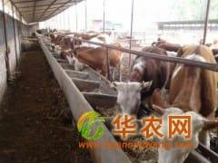 山西红旗肉牛养殖场招商