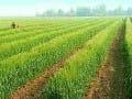 2015年农业发展九大方向分析预测