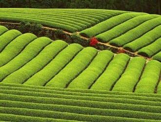 国土部农业部联合督导永久基本农田划定