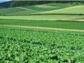 蔬菜成广西第二大农作物(图)