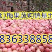沂水县红梅果蔬购销中心