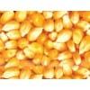 玉米收购价格 饲料厂常年现金求购玉米 高粱 菜饼 麸皮 淀粉