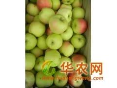 今日低价供应藤木晨阳早熟苹果批发价格便宜哪里有苹果最好