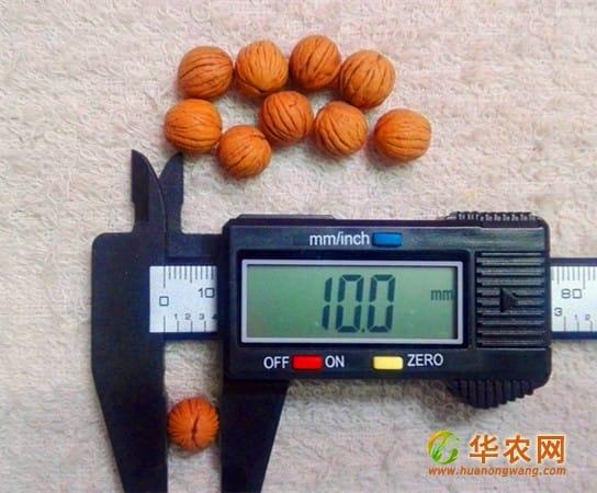 10mm小猴头核桃-1