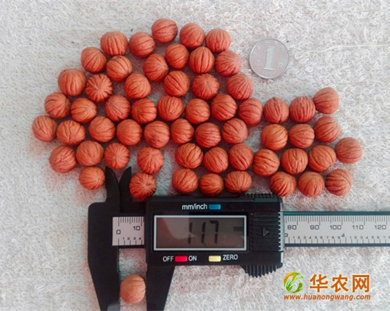 12mm小猴头核桃-1