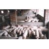 山东大型仔猪养殖批发基地 生猪母猪市场价格走势