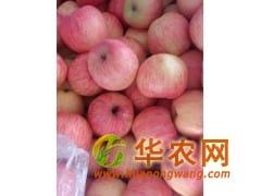 山东红富士苹果便宜了产地直销货源充足质优价廉山东苹果产地