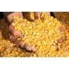 枣阳傲现养殖常年求购玉米麸皮油糠高粱等饲料原料