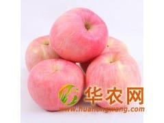 山东红富士苹果产地低价出售