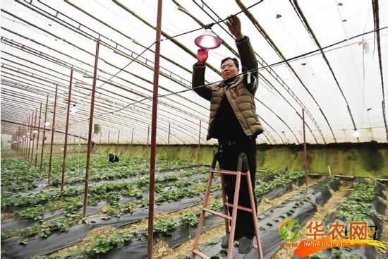 桃城区邓庄镇打造现代农业公园 拓宽农民增收空间