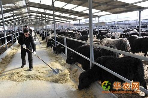 西藏挖掘优势 做大产业 带动群众增收致富