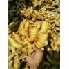 山东生姜批发产地现已大量上市货源充足质优价廉产地直销