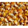 常年求购玉米 菜饼 麸皮 碎米高粱等饲料原料