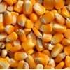 A长期采购:玉米小麦次粉麸皮高粱DDGS等各种饲料原料