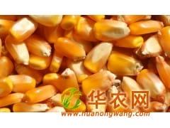 四川绵竹纵翔收购玉米、大米、小麦等原料