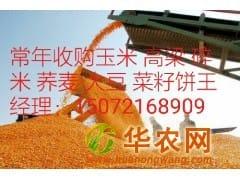 新玉米收购价 大量求购玉米 高粱 大豆 棉粕 荞麦碎米