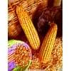 成都华联酒业长期求购玉米小麦高粱碎米等原料