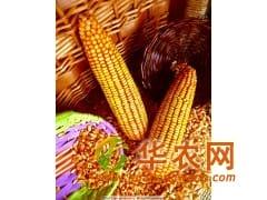 华联酒业长期求购玉米小麦高粱碎米等酿造原料