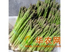 济南抗癌蔬菜种子 芦笋种子种苗 纯绿色保健