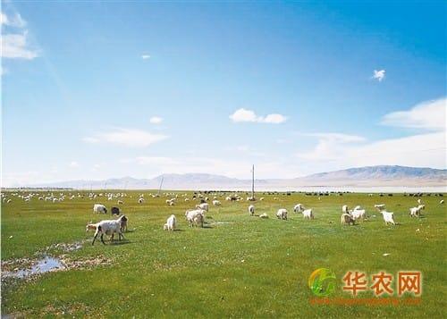 西藏全面实施草原补奖政策 保护草场就是保护饭碗