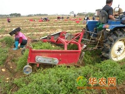 临夏:推广马铃薯生产全程机械化技术