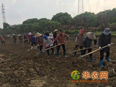 """新型职业农民发展呈""""五高""""特点"""