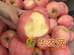 红富士苹果代办,山东苹果基地价格
