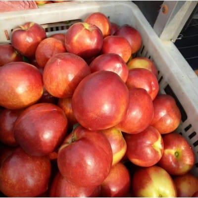 山东的油桃批发市场在哪里