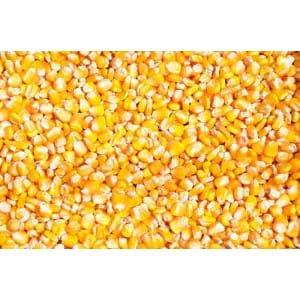 求购小麦高粱大米玉米等原料
