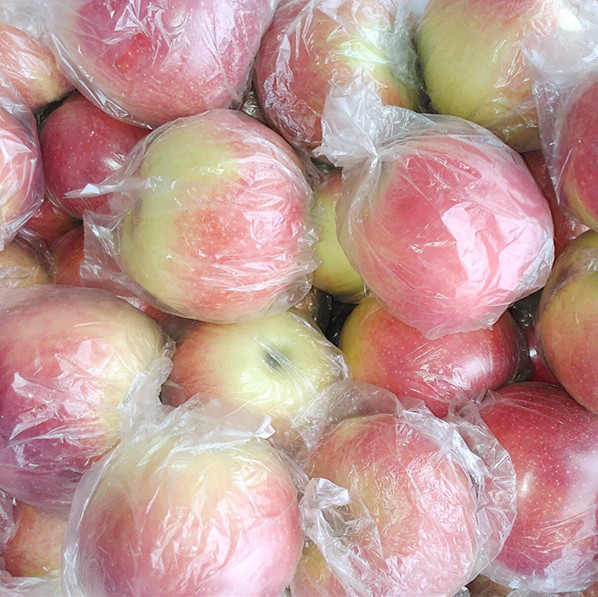 今日山东红嘎啦苹果价格行情